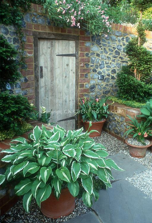 Container of hosta, pots of Calla lilies next to rustic wooden garden door in brick & stone wall, spiral yew shrub evergreens in raised bed, pretty garden scene