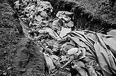 Goma, Zaire<br /> July 1994<br /> <br /> Dead ethnic Rwandan Hutu civilians are dumped into a mass grave in Zaire. <br /> <br /> Following the 1994 Rwandan Genocide, in which Hutu militia groups and the Hutu lead Rwanda military, killed an estimated 800,000 ethnic Tutsis and sympathizers during a 100-day killing spree, 2 million ethnic Hutu's, fearing reprisals, flee the country. The vast majority went to Goma, Zaire as tens of thousands died in epidemics of cholera and dysentery that swept the roadside crowds and refugee camps. People who had actively participated in the genocide hid among the refugees, fueling the First and Second Congo Wars.<br /> <br /> The international community, and the United Nations in particular, drew severe criticism for its inaction in the wake of the Rwandan Genocide.