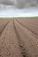 Potato ridges sprayed with residual herbicide following rain  - Licolnshire, April