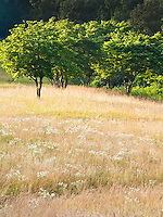 Summer meadow, Greene County, Tennessee