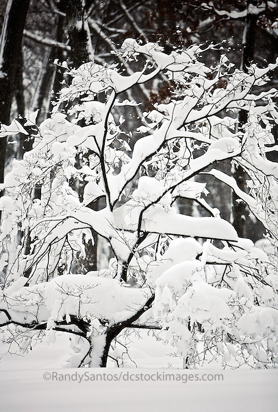 Snow / Blizzard 2010 Washington DC Silver Spring MD<br /> <br /> 4' of Snow fell on Washington DC over 3 days in February 2010. The entire Washington DC Metro area was virtually shut down for a week. These are images from around my yard.