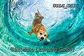 REALISTIC ANIMALS, REALISTISCHE TIERE, ANIMALES REALISTICOS, dogs, paintings+++++SethC_Bob_320B6379rev2,USLGSC15,#A#, EVERYDAY ,underwater dogs,photos,fotos ,Seth