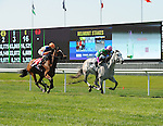 Discreet Marq (no. 2), ridden by Jose Lezcano and trained by Christophe Clement, wins the 19th running of the grade 2 Sands Point Stakes for three year old fillies on May 27, 2013 at Belmont Park in Elmont, New York.  (Bob Mayberger/Eclipse Sportswire)