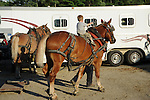 Young boy riding on a draft horse at Cheshire Fair in Swanzey, New Hampshire USA