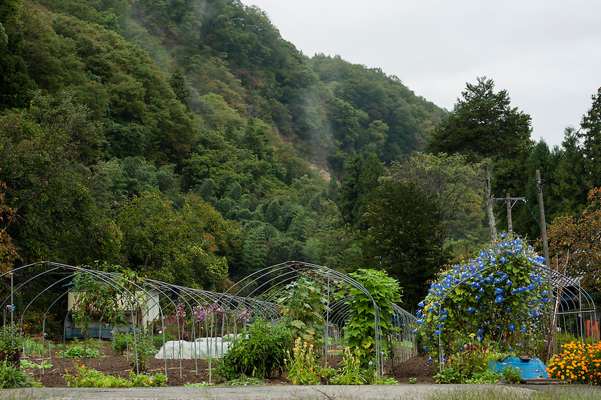 Greenhouses, stripped of their covers, grow a profusion of flowers, including lush morning glories, near the edge of Nobushina Village, Nagnao, Japan.