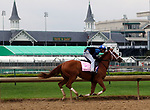 LOUISVILLE, KY -APR 25: Possible Kentucky Oaks favorite Monomoy Girl works out for the Kentucky Oaks at Churchill Downs, Louisville, Kentucky. (Photo by Mary M. Meek/Eclipse Sportswire/Getty Images)