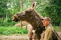 Scientist Alexandre Minaev with a Eurasian elk, Alces alces, wearing a radio collar at the Sumarokova Eurasian elk farm, Kostroma, Russia, Arctic
