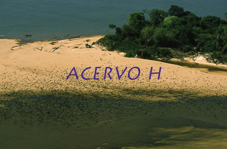 imagem aérea do rio Guaporé - Rondônia com revoada de biguás (Phalacrocorax olivaceus)