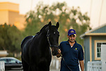 October 02, 2021: Medina Spirit returns to the barn after post race testing after winning the Awesome Again Stakes at Santa Anita Park in Arcadia, California on October 02, 2021. Evers/Eclipse Sportswire/CSM