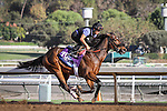 October 27, 2014: Souper Colossal works in preparation for the Breeders' Cup Juvenile at Santa Anita Park in Arcadia, California on October 27, 2014. Zoe Metz/ESW/CSM