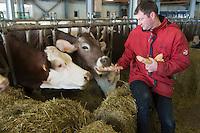 Europe/France/73/Savoie/Val d'Isère:Xavier Mattis Agriculteur bio et  ses vaches à  la Ferme de l'Adroit -  Auto N°:8007