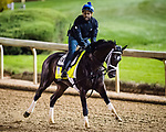 LOUISVILLE, KENTUCKY - MAY 02: Always Dreaming, gallops on the track in preparation for the Kentucky Derby at Churchill Downs on May 2, 2017 in Louisville, Kentucky. (Photo by Douglas DeFelice/Eclipse Sportswire/Getty Images)