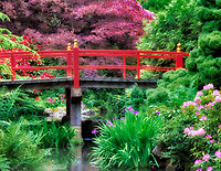 Pond with blooming rhododendrons and iris and bridge. Kubota Japanese Gardens, Seattle, Washington