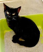 Lynn Atkins/The Weekly Vista <br />