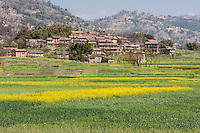 Bhaktapur, Nepal.  Rural Village with Mustard Growing in Fields between Bhaktapur and Changu Narayan.  Haze in air is from nearby brick factories.