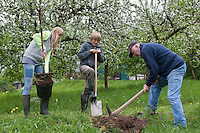 Apfelbaum pflanzen, Kinder pflanzen mit ihrem Großvater einen Obstbaum, Baum im Garten, Streuobstwiese, Kultur-Apfel, Apfel, Obstplantage, Obstanbau, Obst, während der Blüte, Apfelbaumblüte, Malus domestica, Apple, Pommier commun