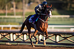OCT 28: Breeders' Cup Dirt Mile entrant Blue Chipper, trained by Kim Young Kwan, at Santa Anita Park in Arcadia, California on Oct 28, 2019. Evers/Eclipse Sportswire/Breeders' Cup