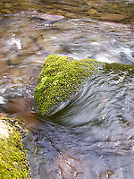Water flowing by moss covered rock<br />