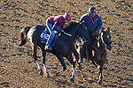 November 4, 2020: Imprimis, trained by trainer Joseph F. Orseno, exercises in preparation for the Breeders' Cup Turf Sprint at Keeneland Racetrack in Lexington, Kentucky on November 4, 2020. John Voorhees/Eclipse Sportswire/Breeders Cup/CSM