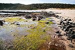 Image Ref: CA992<br /> Location: Bushrangers Bay Track<br /> Date of Shot: 28.09.19