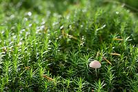 GERMANY, lower saxonia, Forest / DEUTSCHLAND, Niedersachsen, Wald, Waldpflanzen, Moos