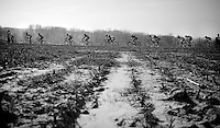 peloton over the Oude Kwaremont<br /> <br /> 3 Days of West-Flanders <br /> stage 1: Brugge - Harelbeke 183km