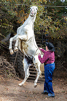 """2016 Best Freelance Editorial Photograph - American Horse Publications<br /> 1st Place:  """"Dian and her Stallion Fad""""<br /> Published in Modern Arabian Horse, October 2015 <br /> What the judges said:<br /> Good action shot of an older woman and her lively horse. Quite a contrast between the two subjects, yet it very much conveys that the little older lady is the boss."""