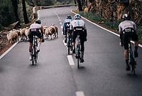 surprise encounter in the descent of the Coll de Puig Major for the race leaders<br /> <br /> Trofeo Lloseta - Andratx: 140km<br /> 27th Challenge Ciclista Mallorca 2018
