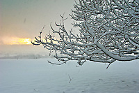 Snow on field and tree branches  near Chipping, Lancashire. Little Bowland Road.