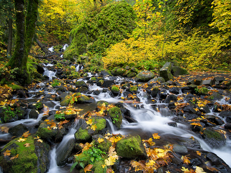 Starvation Creek with fall colors.Columbia River Gorge National Scenic Area, Oregon