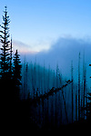 View North at dawn form Deer Park in Olympic National Park in ghostly old forest fire area.  Fog blocks Mt. Olympus and Hurricane Ridge. Olympic Peninsula