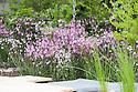 Pink and white ragged robin (Lychnis flos-cuculi and Lychnis flos-cuculi 'Alba') in front of royal ferns (Osmunda regalis). RBC Blue Water Roof Garden, designed by Professor Nigel Dunnett, RHS Chelsea Flower Show 2013.