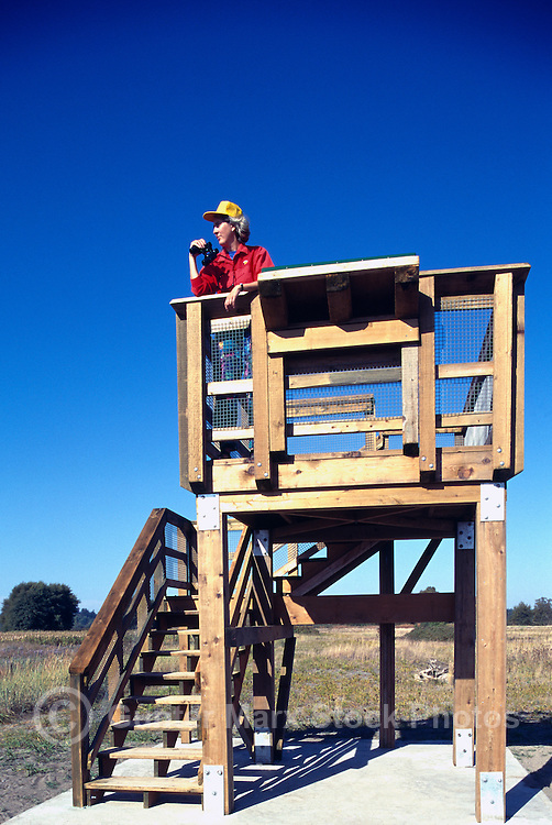 Woman birdwatching / watching for Birds in Marsh, from Wildlife Observation Tower, Boundary Bay Regional Park, Delta, BC, British Columbia, Canada (Model Released)