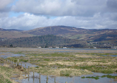 Dundalk salt marsh with the Cooley Mountains in the background