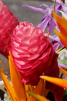 A close-up of pink torch ginger with orange heliconia, O'ahu.