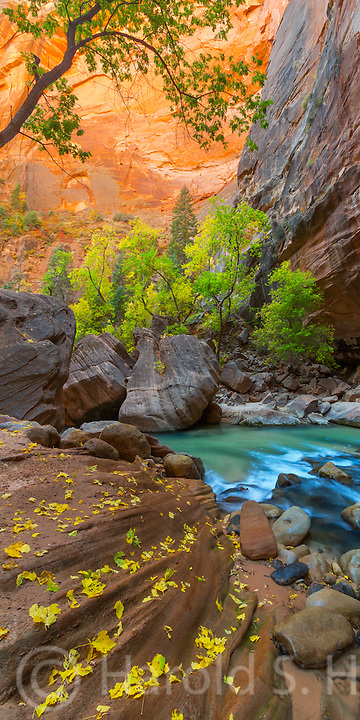 This is a scene along the famous Narrows and the Virgin River in Zion National Park Utah
