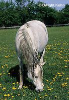 SH06-009z  Arabian Horse