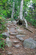 Rock steps along Greenleaf Trail in the White Mountains of New Hampshire USA during the summer months