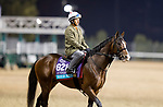 October 29, 2018 : War of Will, trained by Mark E. Casse, exercises in preparation for the Breeders' Cup Juvenile Turf at Churchill Downs on October 29, 2018 in Louisville, Kentucky. Evers/ESW/CSM