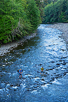 Fly fishing along upper Sol Duc River (this is on the Merrill & Ring property).  Olympic Peninsula, WA. Sept.