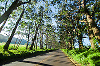 A canopy of trees casts morning shadows over a roadway on Kaua'i.