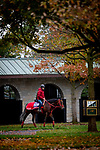 October 30, 2020: Jasper Prince, trained by trainer Hideyuki Mori, exercises in preparation for the Breeders' Cup Sprint at Keeneland Racetrack in Lexington, Kentucky on October 30, 2020. Alex Evers/Eclipse Sportswire/Breeders Cup