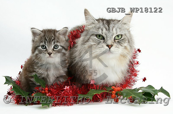Kim, CHRISTMAS ANIMALS, photos, GBJBWP18122,#XA# stickers