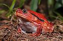 Madagascar: Frogs