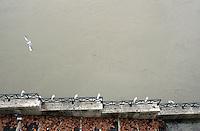 Una veduta del fiume Tevere a Roma, 8 gennaio, 2010. Le piogge dei giorni scorsi hanno provocato un innalzamento del livello delle acque..A view of the swollen Tiber river in Rome, 8 january 2010..UPDATE IMAGES PRESS/Riccardo De Luca