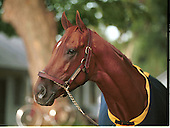 2001 Horse of the Year Point Given, owned by The Thoroughbred Corp. and trained by Bob Baffert, won 9 of his 13 lifetime starts, including the Preakness, Belmont Stakes, and Travers. On May 28, he was named to the National Racing Hall of Fame, Saratoga Springs, N.Y.