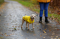 2018 11 09 Emma with her dog Jack, Swansea, Wales, UK