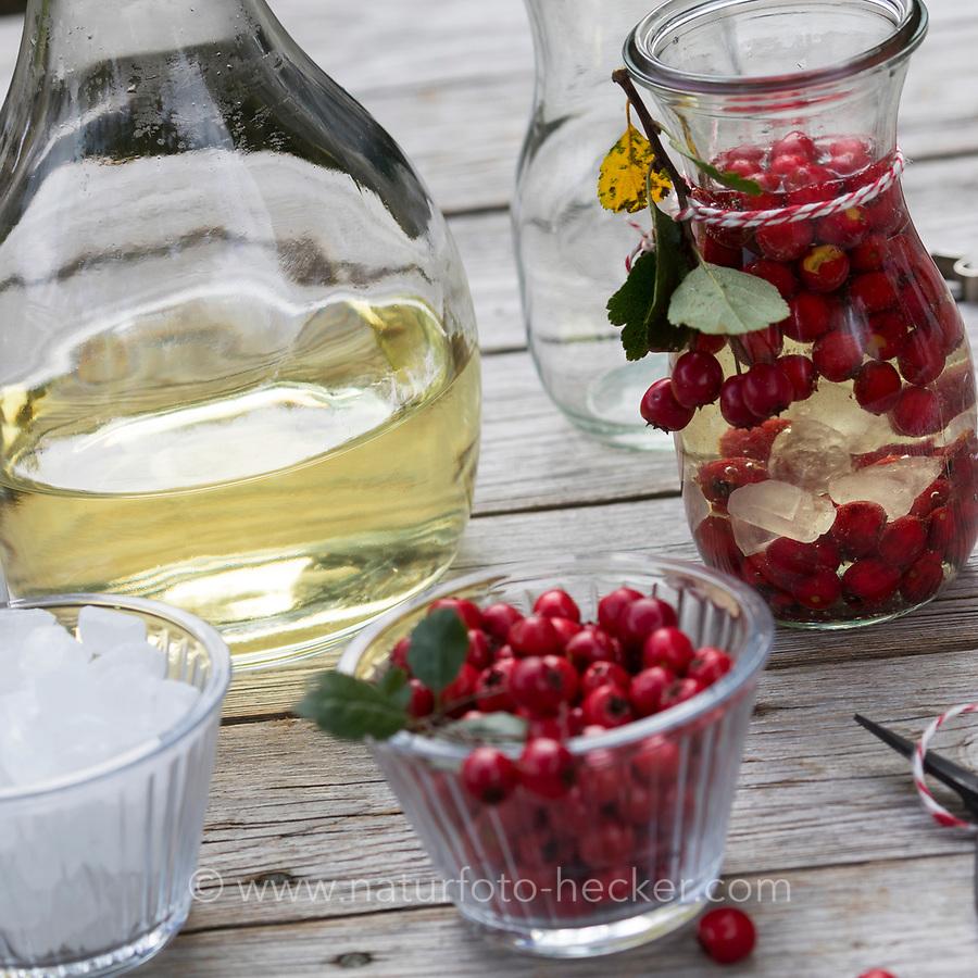 Weißdorn-Wein, Weissdorn-Wein, Weißdornwein, Weissdornwein, Früchtewein, Wein, Weißwein, Früchte von Weißdorn werden in Weißwein eingelegt, Weißdorn-Beeren, Weissdorn-Beeren, Weißdornbeeren, Weissdornbeeren, Beeren, Beere, Zwqeigriffliger Weißdorn, Zweigriffeliger Weißdorn, Weißdorn, Weissdorn, Weiß-Dorn, Weiss-Dorn, Crataegus laevigata, Crataegus oxyacantha, midland hawthorn, English hawthorn, woodland hawthorn, mayflower, May, berries, berry, vine, white wine, L'Aubépine lisse, Aubépine à deux styles, Aubépine épineuse
