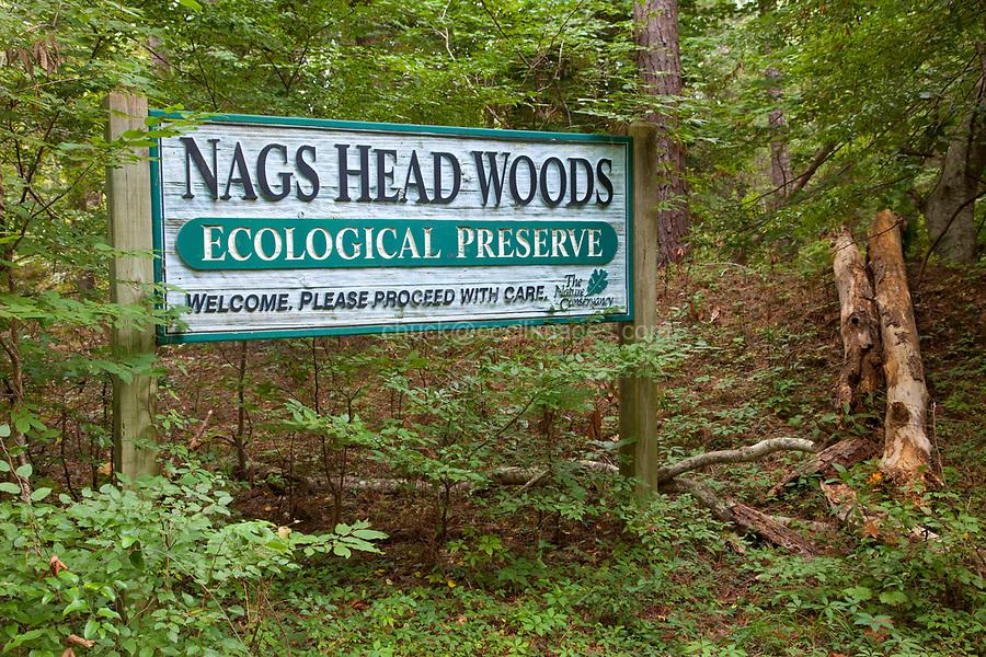 Nags Head Woods, a Nature Conservancy Preserve.  Nags Head, North Carolina.