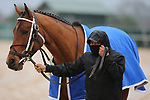February 6, 2021: Boldor (5) before the running of the King Cotton Stakes at Oaklawn Racing Casino Resort in Hot Springs, Arkansas on February 6, 2021. Justin Manning/Eclipse Sportswire/CSM